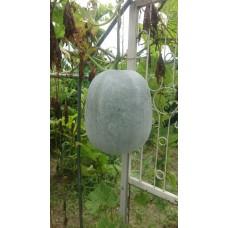 有機瓜果種植實習課程